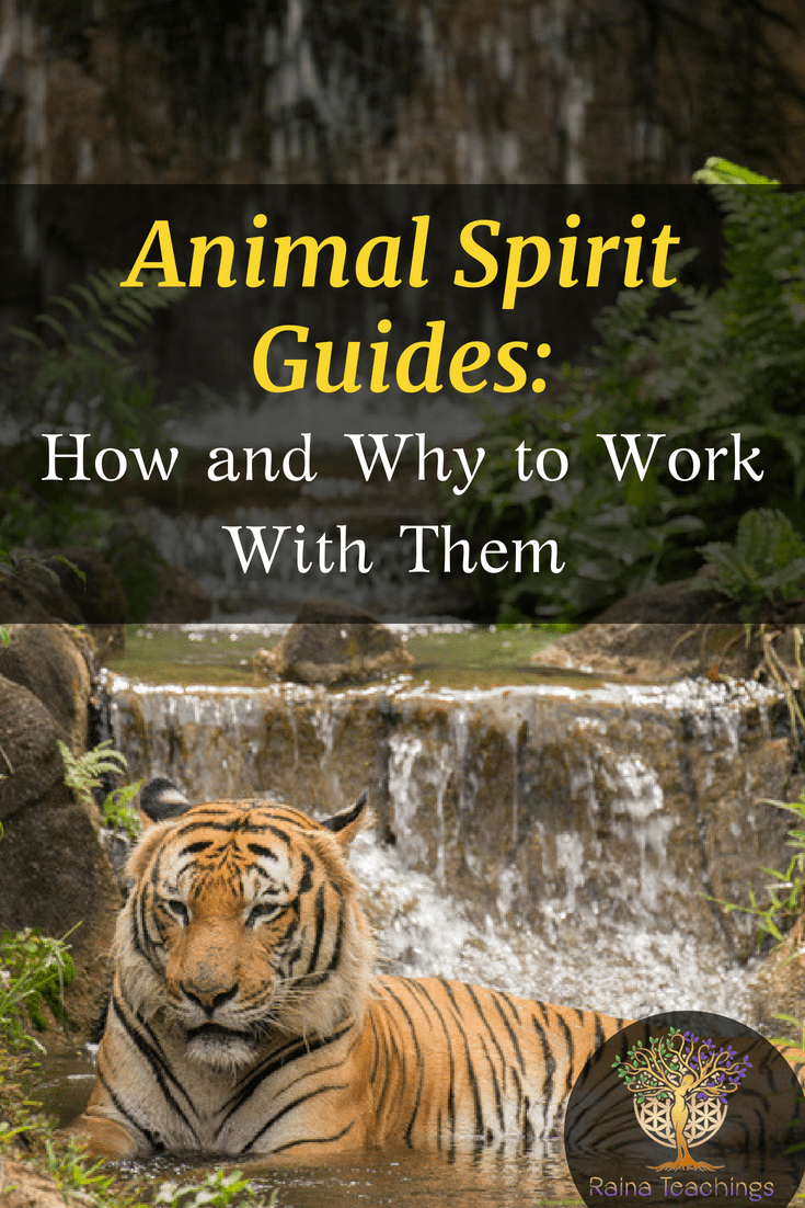 Learn how to connect with your animal spirit guides and what their role is in your spiritual growth | rainateachings #animalspiritguides #metaphysics #spiritualdevelopment #spiritteacher #channeling